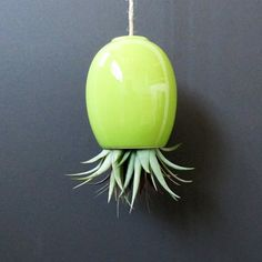 HALF OFF SALE  large green hanging airplant pod by mudpuppy