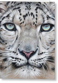 Faces Of The Wild - Snow Leopard Greeting Card by Elena Kolotusha