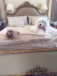 Jacklyn Smith's dogs on her bed.