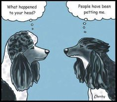 Oh dear SOO funny Only people with poodles would understand