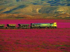 Desierto Florido Chile