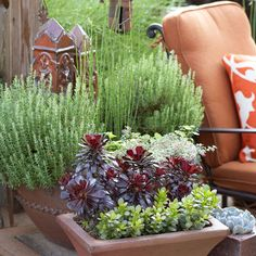 Succulents are perfect for summer. For a pleasing vignette, put several containers together. Link them visually by using pots in similar colors or materials. As for the plants, place tallest in back and stairstep down. Mixing up plant textures and colors helps too.