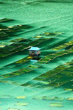 Indrasarobar lake, Fishing nets and a Lonely Station, kulekhani, Nepal  by Mohan Duwal