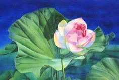 SERAPHIM water lotus blossom watercolor painting, painting by artist Barbara Fox