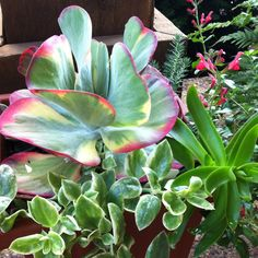 Various succulents at my kitchen door