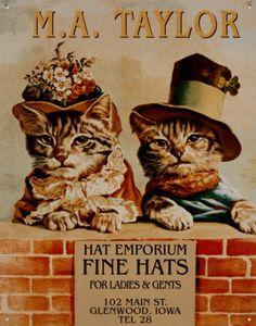 Hats 2 kittens Tin Sign