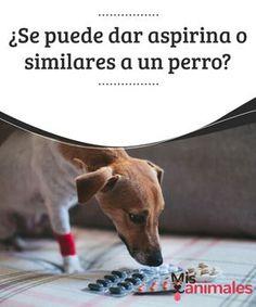 ¿Se puede dar aspirina o #similares a un perro? Los #perros pueden consumir muchos de los productos #alimenticios que nosotros comemos. Eso hace pensar a muchos que también pueden tomar nuestros medicamentos. La aspirina es uno de los más inofensivos. De ahí que muchas personas se la #administran a sus animales.