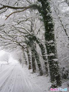 Wageningen in de sneeuw 2012