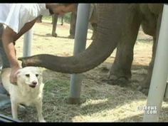 Elephant & Dog - YouTube
