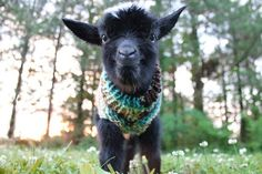 Get your yarn ready. | These Baby Goats In Tiny Sweaters Will Make Your Day