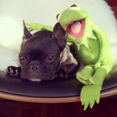 French Bulldog and Kermit the Frog ❤️