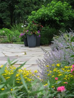 Austin Ganim Landscape Design, LLC This irregular bluestone patio is surrounded by plantings that bloom from spring until fall. Incorporating perennials such as nepeta and coreopsis for early season interest followed by hydrangea trees and clethra for late summer (both not in bloom). Charcoal gray containers filled with colorful annuals and tropical add interest to the space.