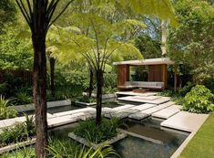 Contemporary garden with tree ferns and water feature.