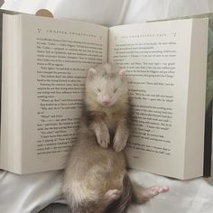 Ferret and Harry Potter ❤️