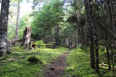 The Magic of the Forest {Island Trails of PEI}
