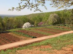 Thomas Jefferson, Asparagus and American Independence (by Tori Avery): His Virginia plantation at Monticello was a place of horticultural creativity and study that evolved our culinary consciousness.