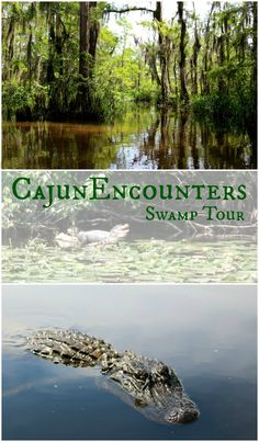 Who likes alligators? Head into the Louisiana swamp with Cajun Encounters for an up close and personal alligator experience! On our trip to New Orleans, we ventured out on a swamp tour! See what happened - on the blog now: http://scrappygeek.com/cajun-encounters-swamp-tour/ - ad -
