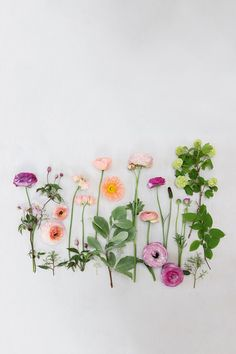 A+selection+of+ranunculi,+apricot+Icelandic+poppies+and+shrubs+such+as+whitebeam+and+Viburnum+opulus+'Roseum',+make+up+this+month's+flower+arrangement.+Clematis+montana+has+been+added+to+so+en+the+composition.