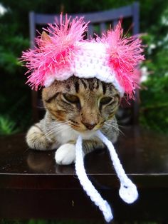 Cat Hat Costume - The Pink Scalloped Wackadoodle Hat for Cats and Small Dogs - Small Dog Hat Costume