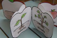 almakönyvecske Kindergarten Projects, Play To Learn, Science For Kids, Montessori, Preschool, Apple, Teaching, Children, Fall