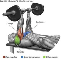 TRICEPS -  CLOSE GRIP BARBELL BENCH PRESS