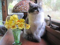 Cat with nasturtiums