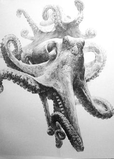 Octopus by ~indiart3612 on deviantART I love the Aerial perspective! Octopus Drawing, Octopus Octopus, Octopus Design, Octopus Tattoos, Octopus Sketch, Octopuses, Animal Drawings, Pencil Drawings, Art Drawings