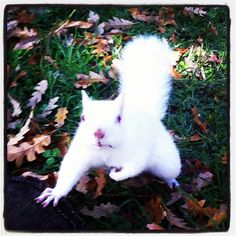 White squirrel. Seriously.