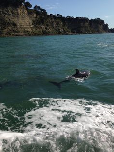 Dolphins NZ