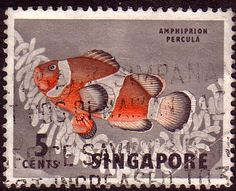 Singapore 1962 Orange Clown Fish Fine Used SG 66 Scott 55 Other Asian and British Commonwealth Stamps HERE!