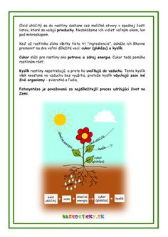 Fotosyntéza pre deti Teacher, Learning, School, Professor, Schools, Teaching, Education