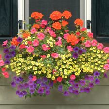 Window Box Planter filled with beautiful summer-inspired plants and colors.
