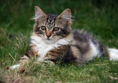 Lovely-KittyCats, 89cats: grass life byMoon over Belgium