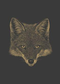 Ferdy Remijn - fox