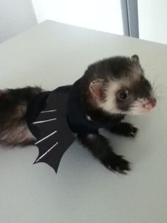 ferret halloween costume