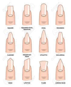 Illustration of Different nail shapes Fingernails fashion Trends vector art clipart and stock vectors. Image The post Illustration of Different nail shapes Fingernails fashion Trends vector art c appeared first on nageldesign. Summer Acrylic Nails, Best Acrylic Nails, Spring Nails, Squoval Acrylic Nails, Acrylic Nail Designs, Oval Nail Designs, Summer Nails, White Tip Acrylic Nails, Acrylic Nails Almond Short