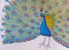Peacock vintage illustration by Ninainvorm, via Flickr
