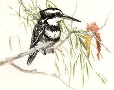 Pied Kingfisher, Original watercolor painting, grey black white art, 15 x 12 in, watercolor birds