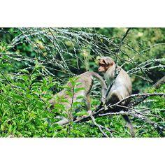smartprakash21/2016/10/19 23:04:30/@AppLetstag #monkeys #arctic #arcticmonkeys #love #zoo #animals #monkey #am #cute #alexturner #fun #turner #alex #selfi #me #селфи #셀스타그램 #smile #happy #girl #selfie #instasize #셀카 #likeforlike #instalike #like4like #얼스타그램 #selca #instagood #friends