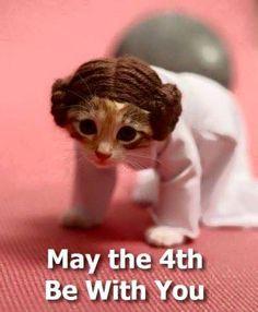 Ahhh, Leia Kitty...