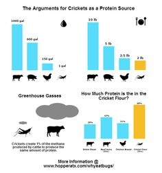 Why eat insects?!  Think I'll stick with beans instead. ;-)