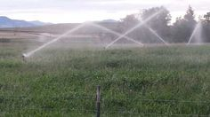Efficient Irrigation is Key in Farming - SIFT news