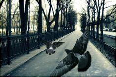 Pigeons | by  Andrew Kuznetsov  on Flickr - Photo Sharing!