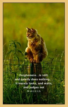 Forgiveness ~❤️~ A Course in Miracles Spiritual Path, Spiritual Wisdom, Miracle Quotes, Peace Of God, A Course In Miracles, Special Quotes, Wisdom Quotes, Life Quotes, Forgiveness