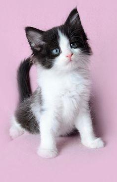 Aww I love tuxedo cats