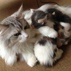 Mom & babies...