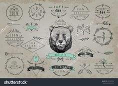 Set Of Vintageframes And Labels With Bear. Font Design Elements And Page Decoration Label Collection With Vintage Engraving…