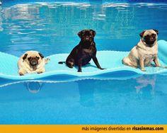➟➟➟ Ríe sin parar con memes graciosos el salvador, gifs with sound season, humor para viernes, gifs on vsco y gifs malcriados → http://www.diverint.com/memes-imagenes-graciosas-espanol-40/