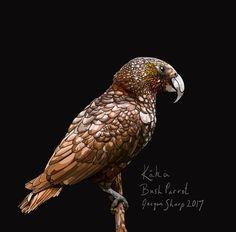Kākā (Bush Parrot) on Photo Block Photo Blocks, Photo Reference, Parrot, Birds, Website, Digital, Prints, Painting, Animals