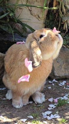 Bunny smelling the roses. #animals~cute